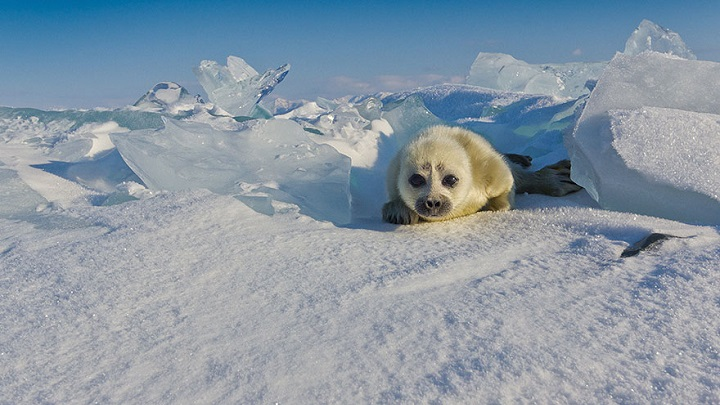 foca-bebe-foto