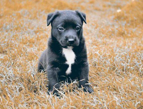 ¿Por qué se hace sus necesidades mi perro en casa?