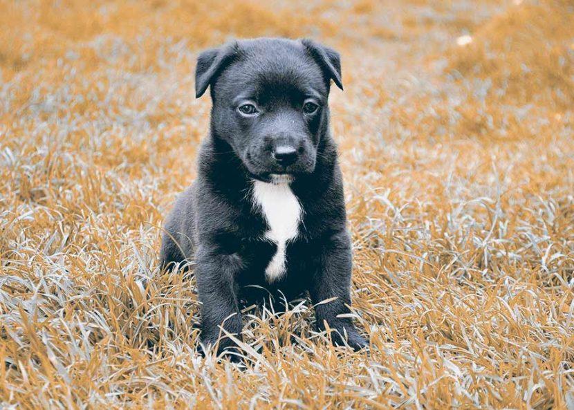 por-que-se-hace-sus-necesidades-mi-perro-en-casa-3-830x593