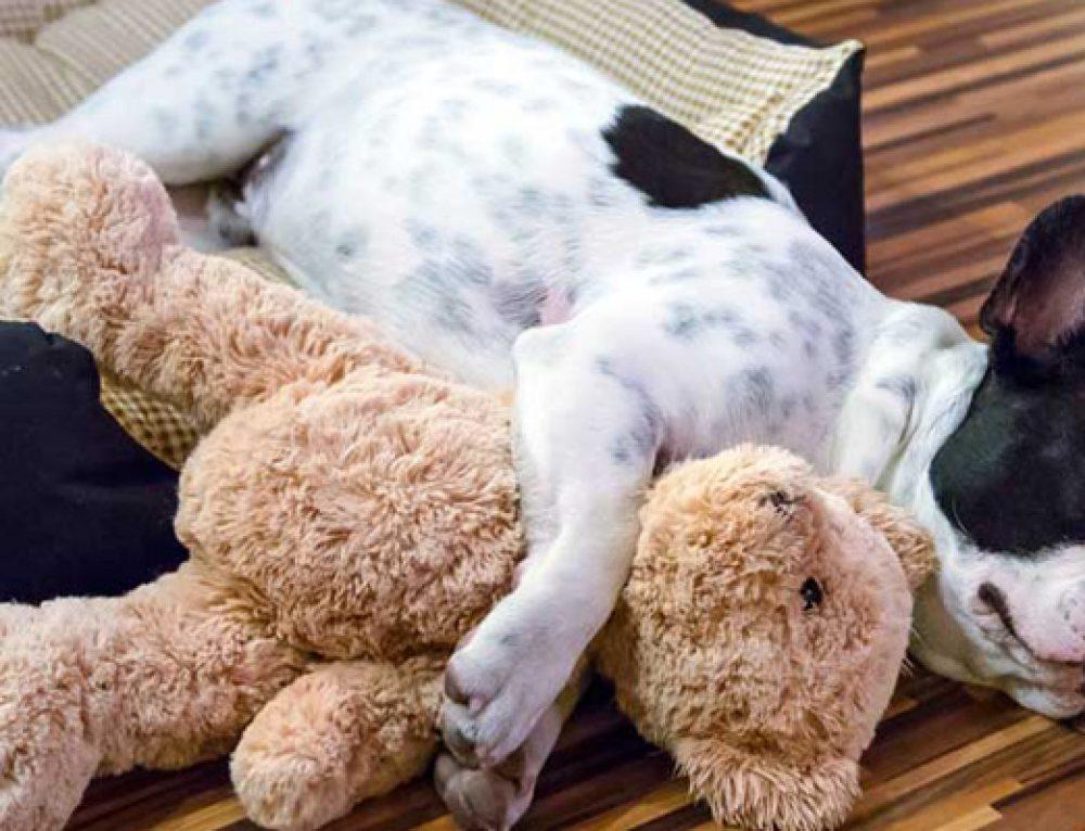 Consejos para cuando llega un cachorro a casa