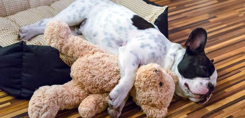 cachorro-en-casa
