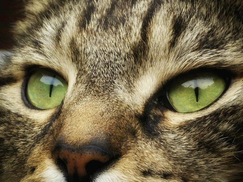 Cómo premiar a un gato