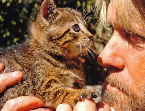 Cómo alimentar a un gato viejo