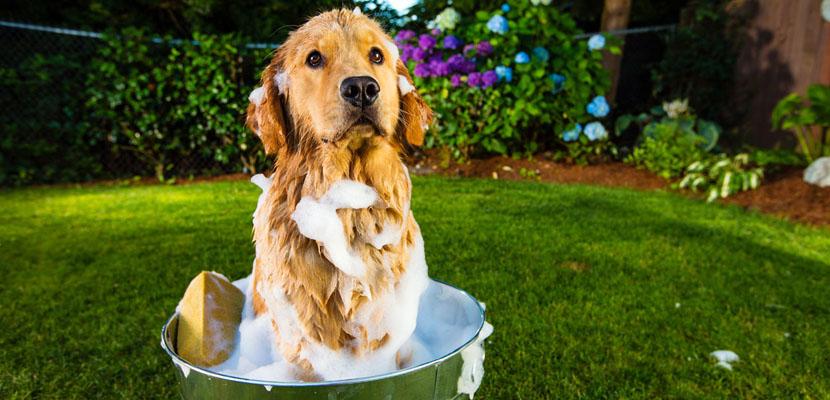 cuidar-la-piel-del-perro