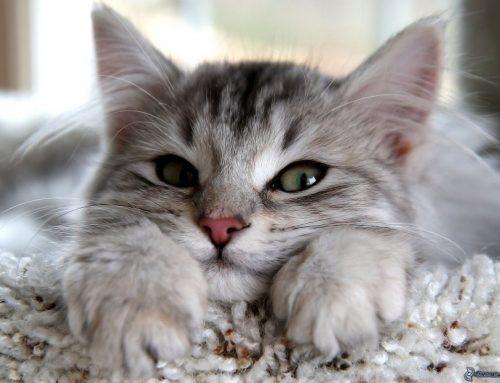 Cómo cuidar a un gatito en invierno