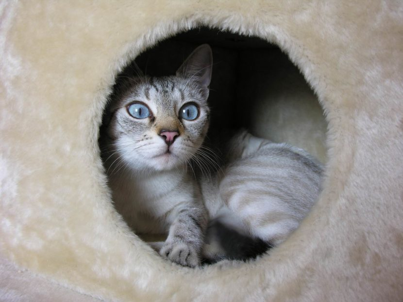 Cómo saber si un gatito tiene frío