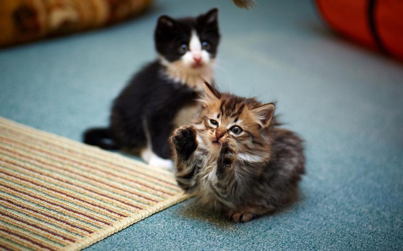 gatitos_jugando