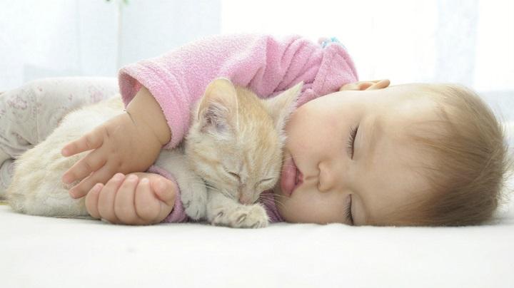 gato-conoce-bebe