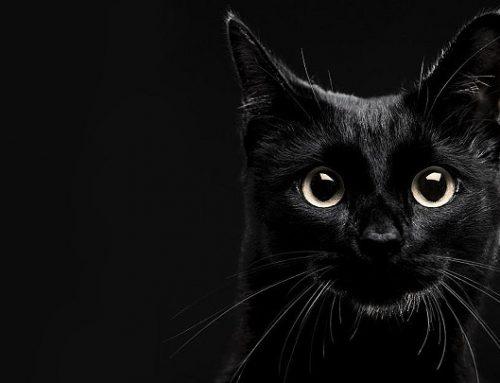 ¿Por qué se dice que los gatos negros traen mala suerte?