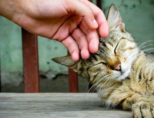 Cuánto cariño necesita un gato
