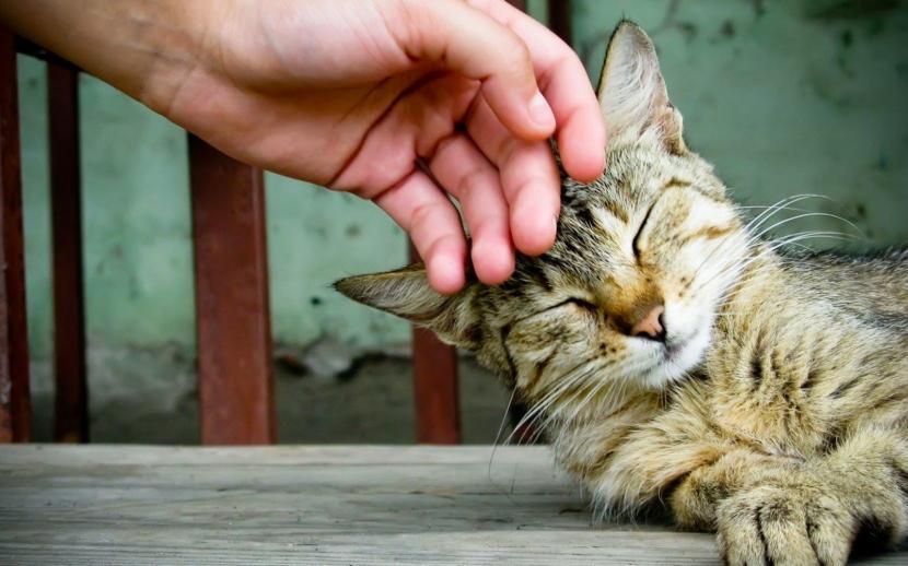 gato_humano