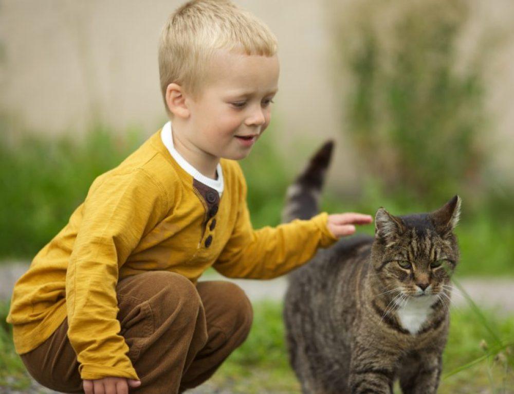 Qué les aportan los gatos a los niños