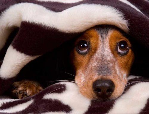 Cómo tratar a un perro con miedo