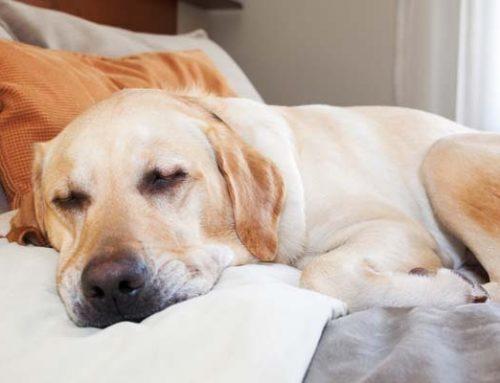 ¿Qué sueñan los perros?