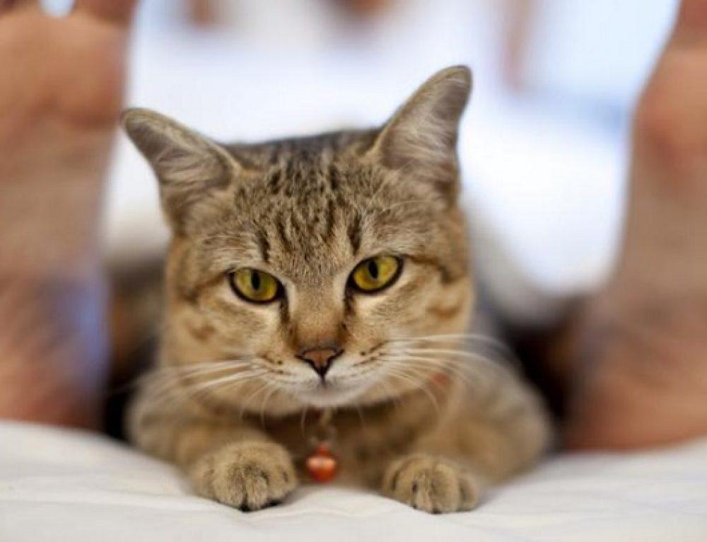 Divertido vídeo que muestra las diferencias entre tener un gato y no tenerlo
