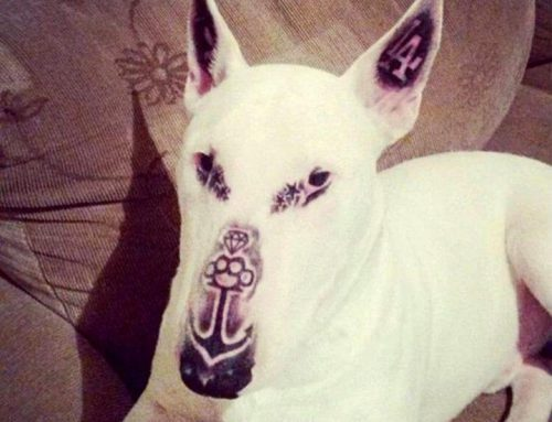 ¡Indignante! Tatúa a su perro y alardea de ello en las redes sociales