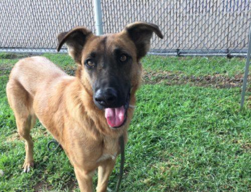 Una familia acude a un refugio a buscar una nueva mascota y se encuentran a la perra que habían abandonado