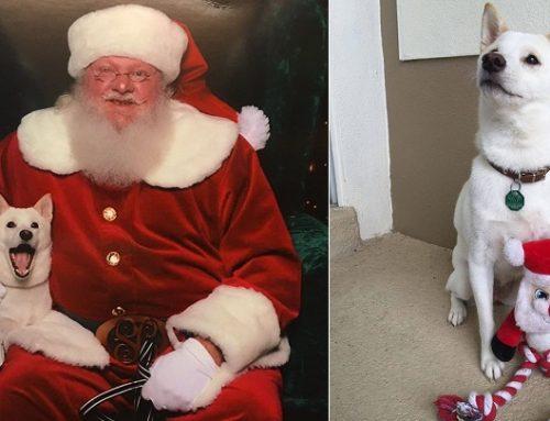 Kya, un perro que siente adoración por Papá Noel