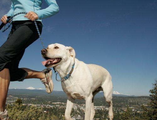 Deportes para hacer con el perro