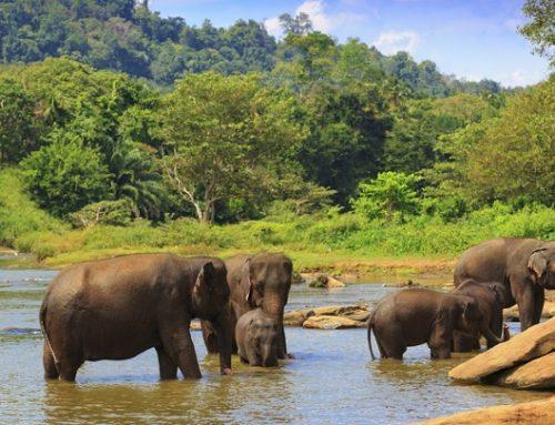 Vídeo de una manada de elefantes salvando a una cría
