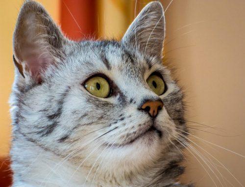 Costumbres de los gatos