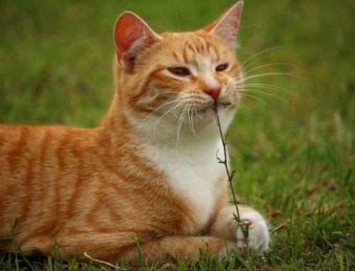 Por qué los gatos son más independientes que los perros