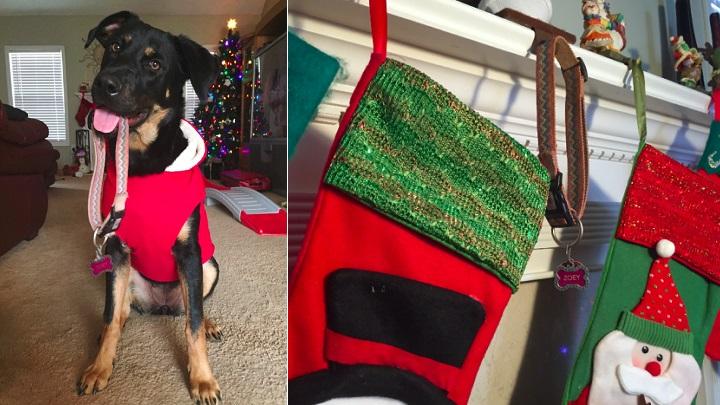El emotivo regalo que este perro le hizo a su nueva familia en Navidad