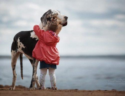 Hermosas fotos de perros grandes y niños pequeños