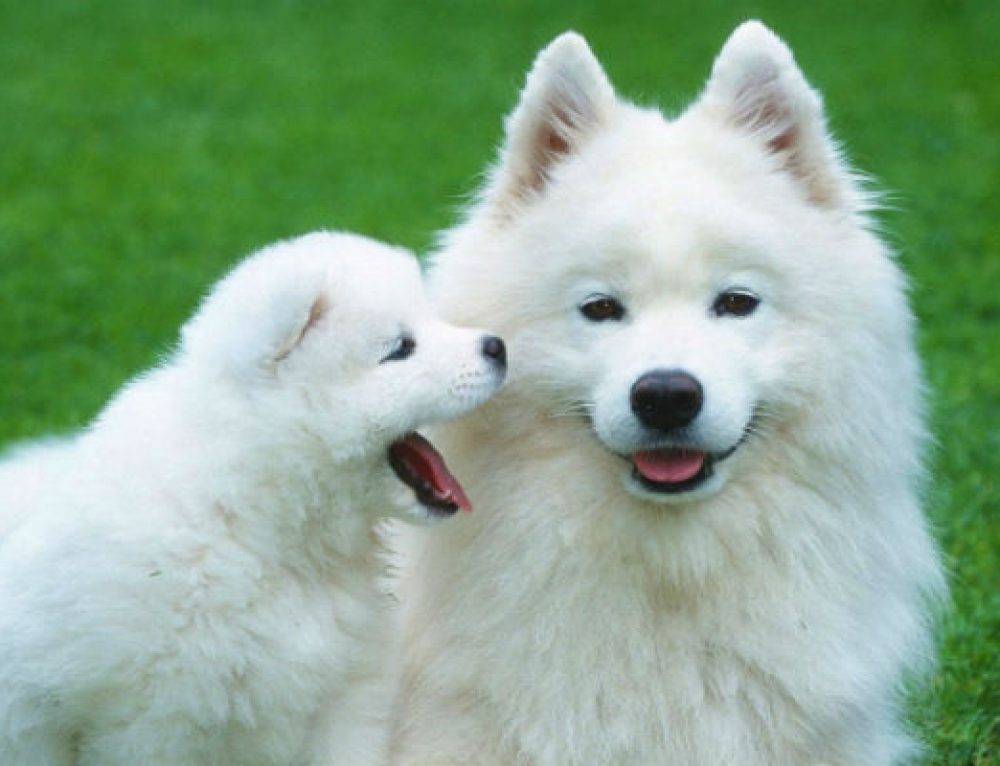 10 curiosidades sobre los perros que quizás desconozcas