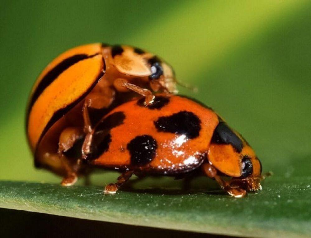 Impresionantes fotos de insectos y anfibios