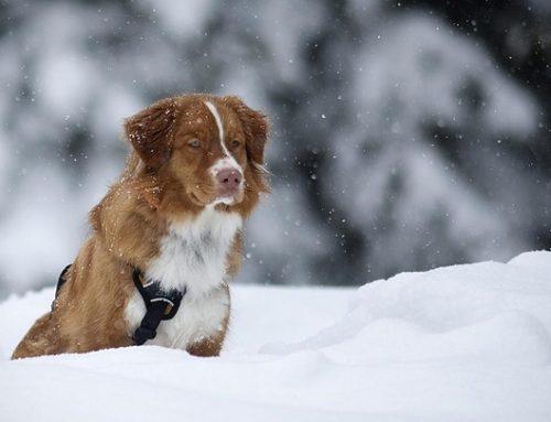 Un hombre se lanza a un río helado para salvar a un perro atrapado