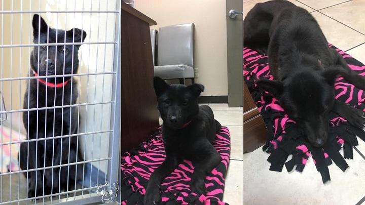 Harriet, la perra rescatada de un matadero que solo sabe dormir de pie