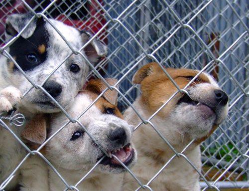 ¡Alerta animal! Aumenta el número de robos de perros en parques españoles