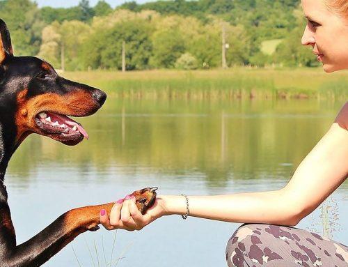 """""""Mi perro no es mi hijo"""", una reflexión que te dejará sin palabras"""