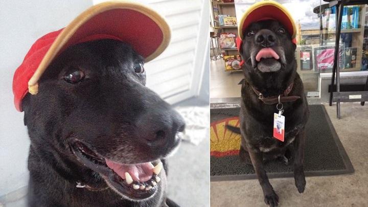 El perro abandonado que se ha convertido en el mejor empleado de una gasolinera de Brasil