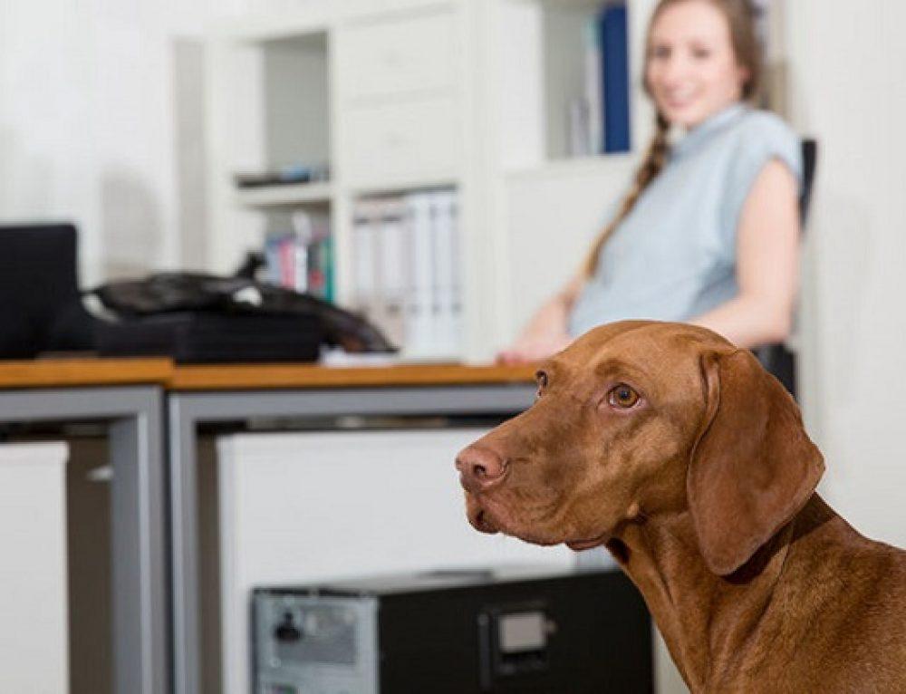 Beneficios de ir a trabajar con tu perro