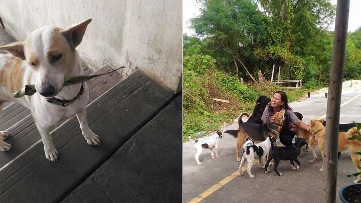 El perro callejero que lleva regalos a la mujer que le da comida