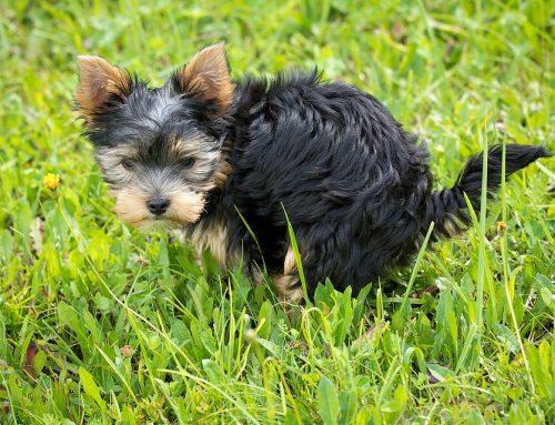 ¿Una tasa a los dueños de perros para la limpieza de la ciudad?