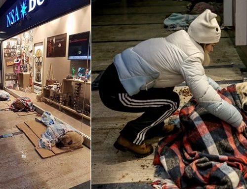 Centros comerciales en Estambul protegen a los perros callejeros del frío