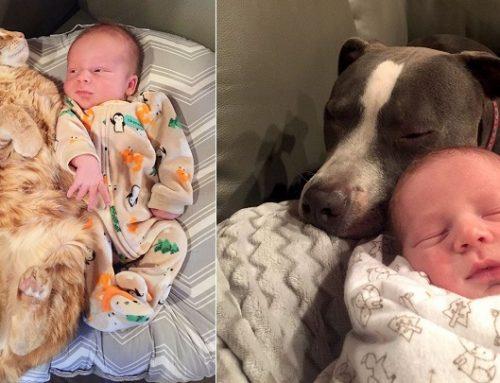 Los cuatro perros y la gata que tratan al bebé de la familia como uno más