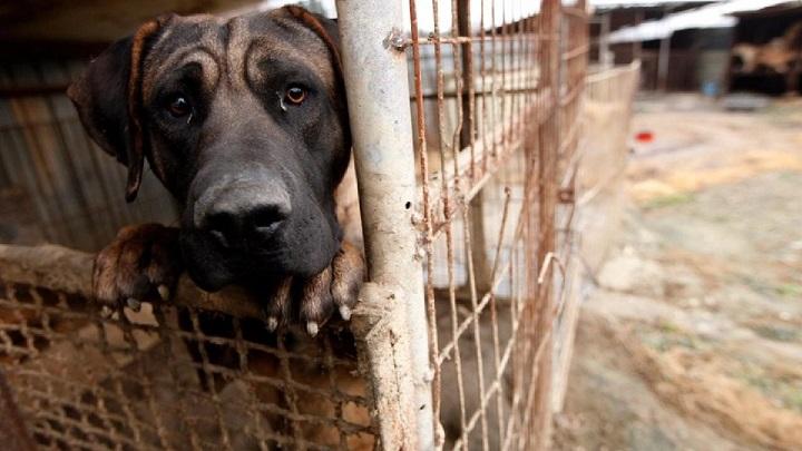 Taiwán prohibe el consumo de carne de perro y gato