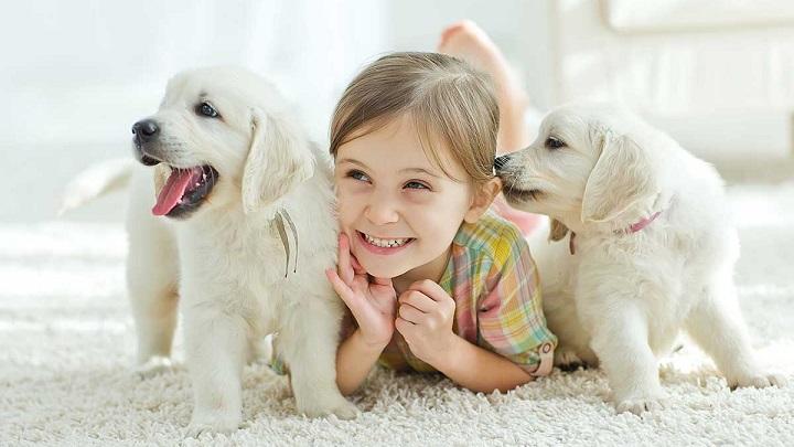 Cómo lograr que el niño se encargue del perro