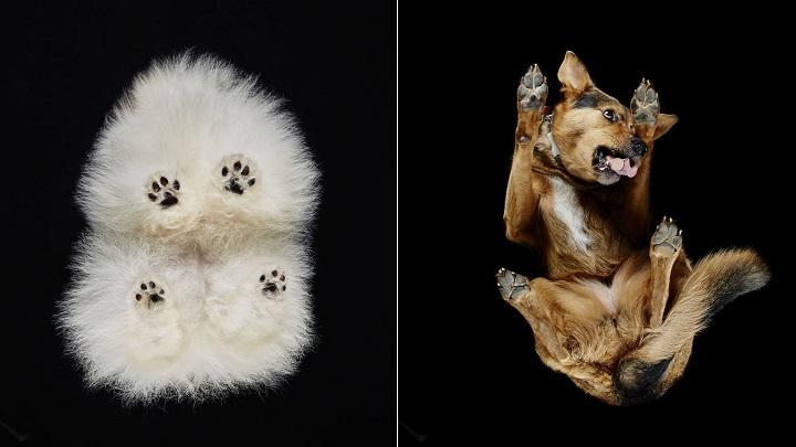 Impresionantes fotos de perros desde abajo