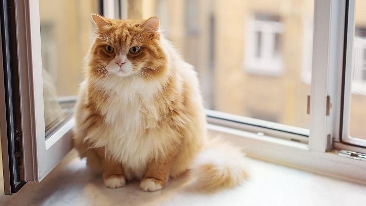 tratamiento natural de la diabetes felina