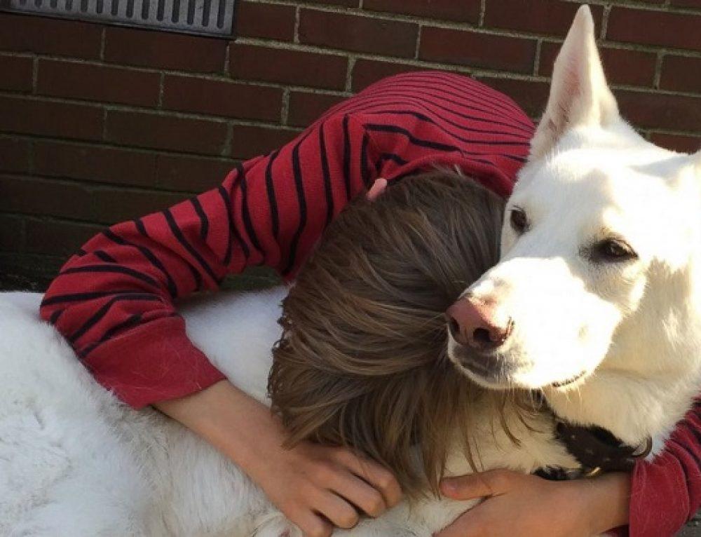 Emocionante reencuentro entre un niño y un perro