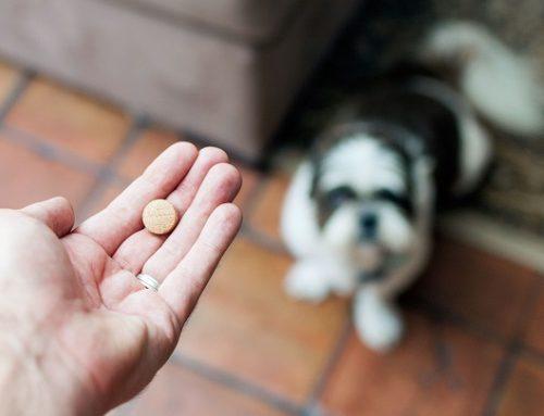 Trucos para dar medicamentos a perros