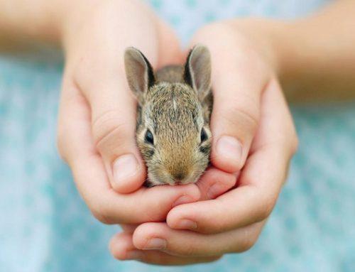 5 roedores ideales para niños