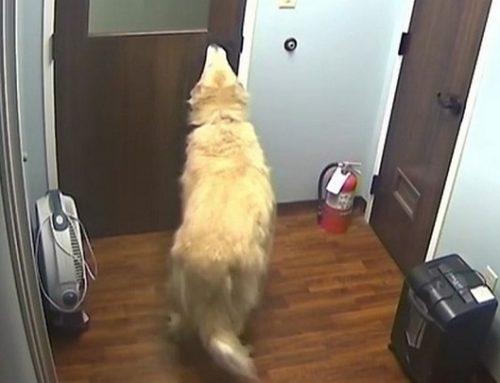 General, el perro que logró escaparse de un hospital para reunirse con su familia