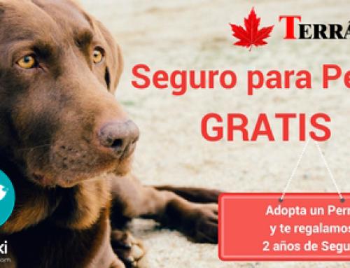 Adopta un Perro con Miwuki y obtendrás su seguro gratis durante 2 años