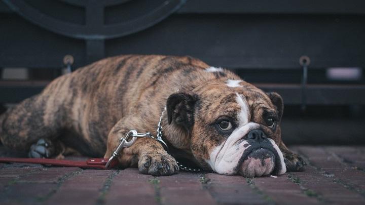 Consejos para ir a casa de una persona que tiene perro o gato
